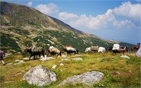 Horseback in Rhodope mountains