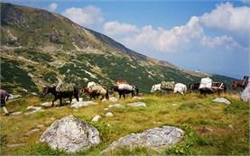 Катание на лошадях в Болгарии