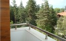 Balcony view » Pine Trees