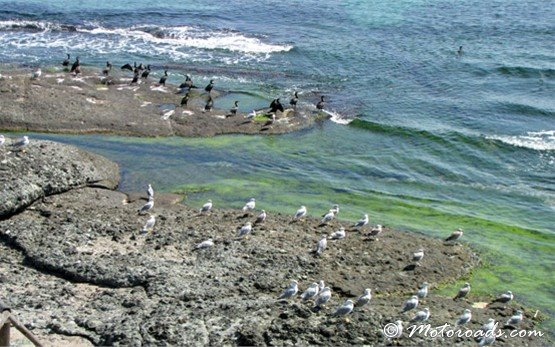 Море - Ахелой