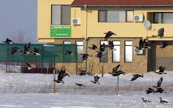 Птичая площадь - Дуранкулак