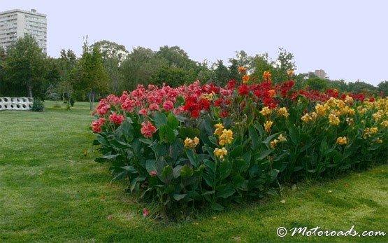 Цветы - Бургас