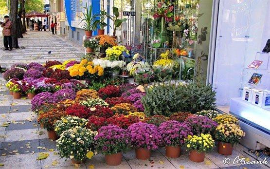 Цветы - Добрич