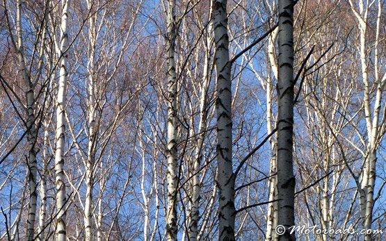 Лес-  горы Витоша