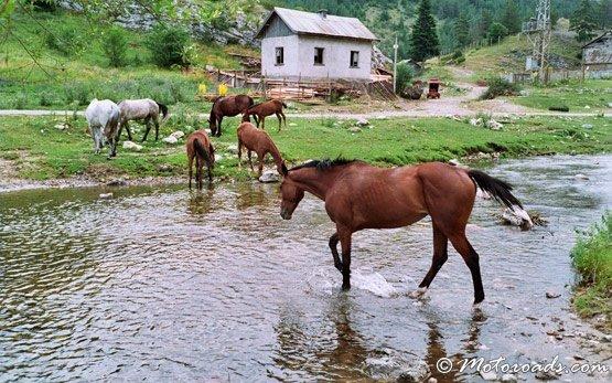 Horses, Trigrad