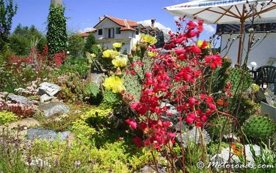 Цветы - Долна баня