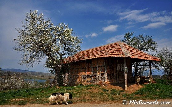 House, Logodazh