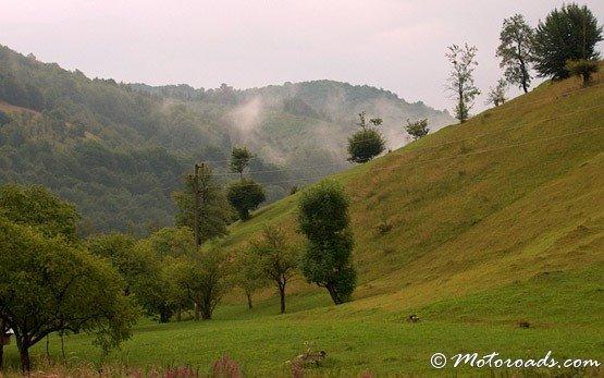 Meadows, Ribaritsa
