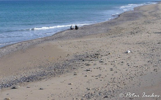 Пляж - Шабла