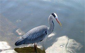 Птица на Черном море