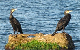 Birds - Black Sea coast