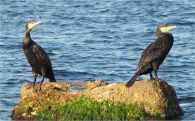 Птицы - побережье Черного моря
