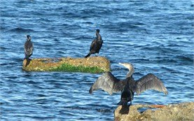 Black Sea - birds