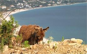 Donkey in Albania
