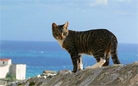 Dubrovnik - Cat