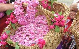 Фестивал на Розата в България