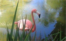 Flamingo - Bavaro Resort, Dominican Replublic