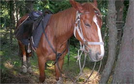 Поход с коне