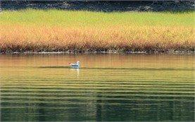 Studen Kladenec Lake