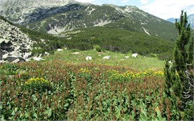 Trekking in Pirin mountain